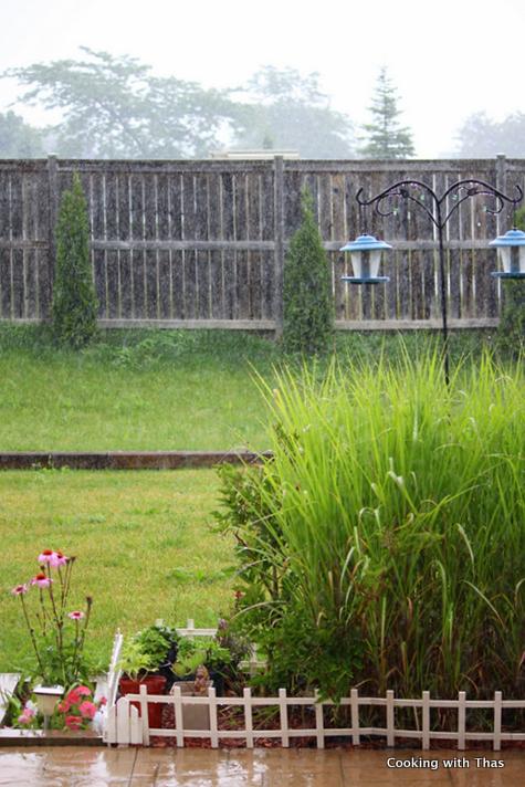 rainkissed backyard
