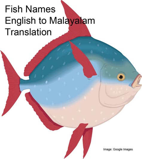 fish names translation