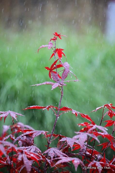rainkissed