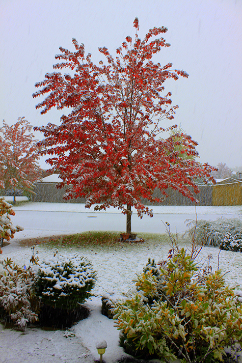 Snow in Fall
